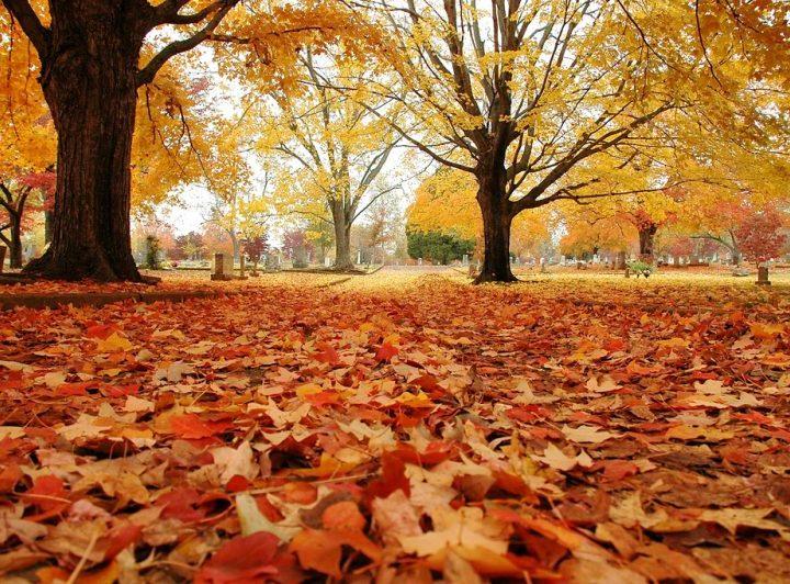O que se pode fazer na horta em Outubro?