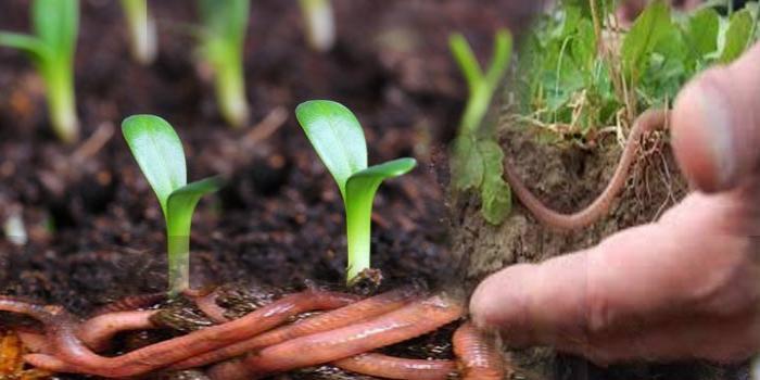 Agricultura Biológica num contexto regional