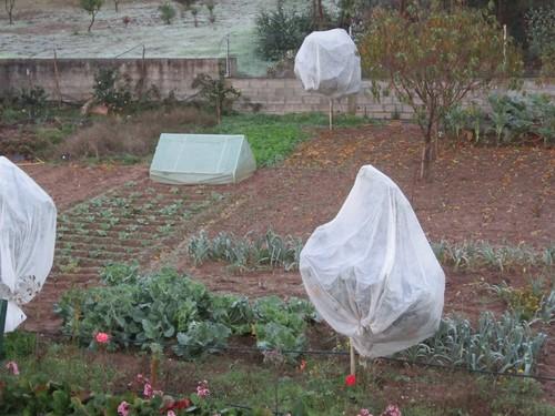 O que se pode fazer na horta em Novembro?