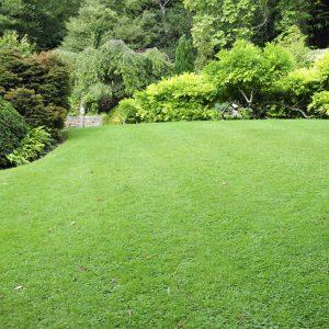 Espaços Verdes & Adubação Verde