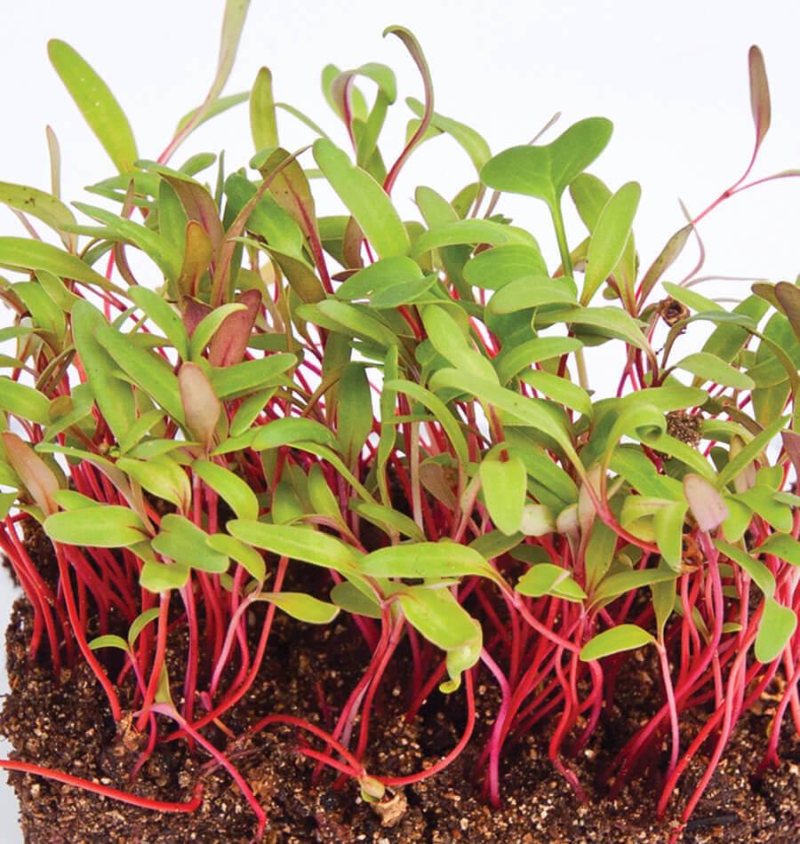 Microvegetais, Rebentos & Flores Comestíveis